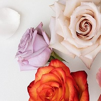 BloomsyBox: Bloomsy Roses Box: Up to 20% OFF