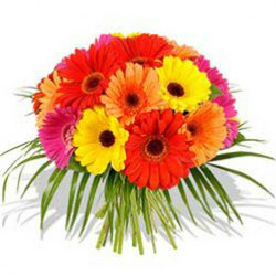 Flaberry: From ₹ 399 on Beautiful Flowers Orders