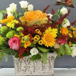 Winni: From ₹ 349 on Best Flower Deliveries !